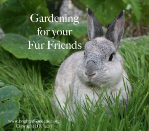 Little Pepper loved to be in the garden, creating a garden for your fur kids is a great way to interact and share the beauty and wonder of nature with another being.