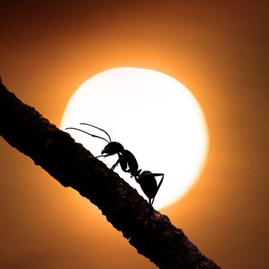 Ant & sun