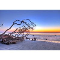 """Gorgeous!  """"Driftwood Sunrise"""" - The Canvas Art Factory  http://www.thecanvasartfactory.com.au/store/products/Driftwood-Sunrise%2C-Long.html"""