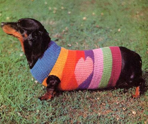 best dog sweater
