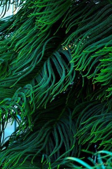 imagenes de algas marinas verdes