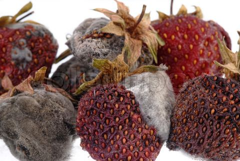 Its really interesting studying how the texture of thee fruit alters as it decays.