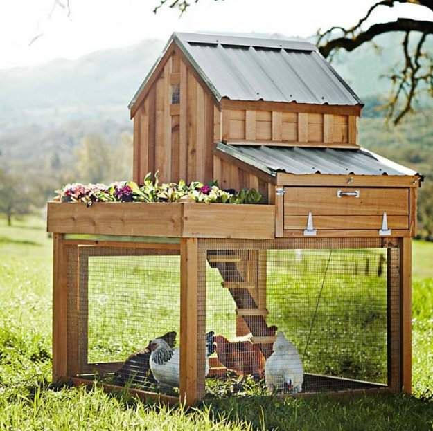 Check out Chicken Coop Plans Homesteaders Must Know at http://pioneersettler.com/chicken-coop-plans-homesteaders-must-know/