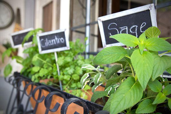 Gardening - kitchengetaway.com