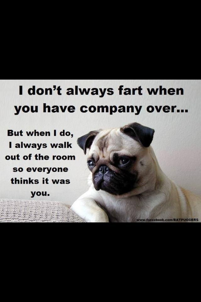 Can A Dog See His Own Fart