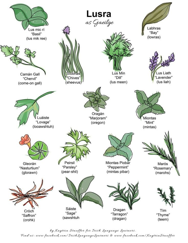 Irish Gaeilge names for herbs by Irish Language Learners, a great site for learning the Irish language!  January is just cold. Wet. Gray. I've been procrastinating in almost every aspect of my responsibilities, but managing to pull myself up by the bootstraps and finish deadlines…just barely!