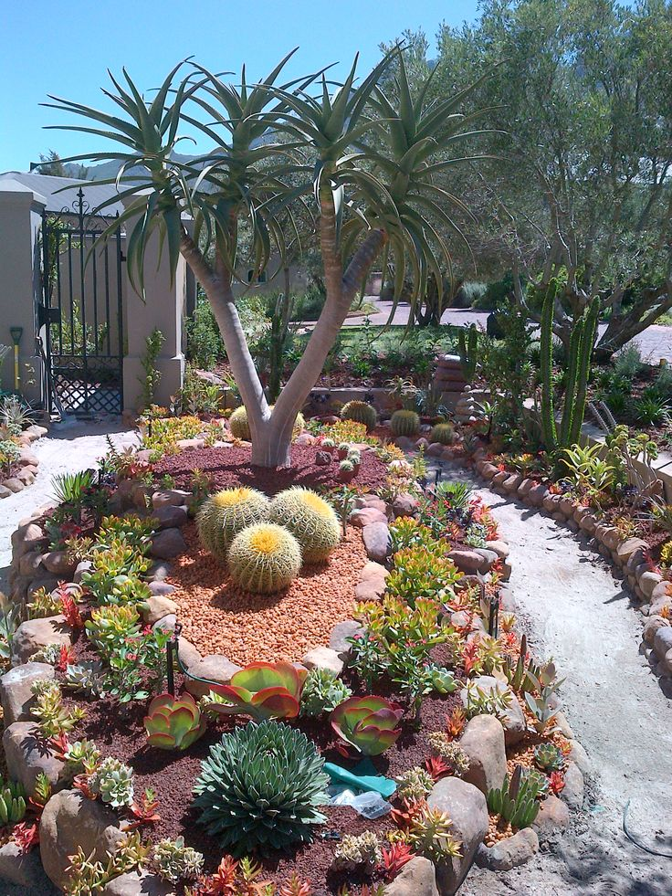 Desert Rock Garden Ideas best 25 desert landscaping backyard ideas on pinterest Maybe I Could Have Barrel Cactus If I Put Them In A Raised Garden So The