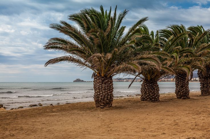 group of palm trees with a view to the fortress in Peniscola, Spain by Mircea Bunea on 500px