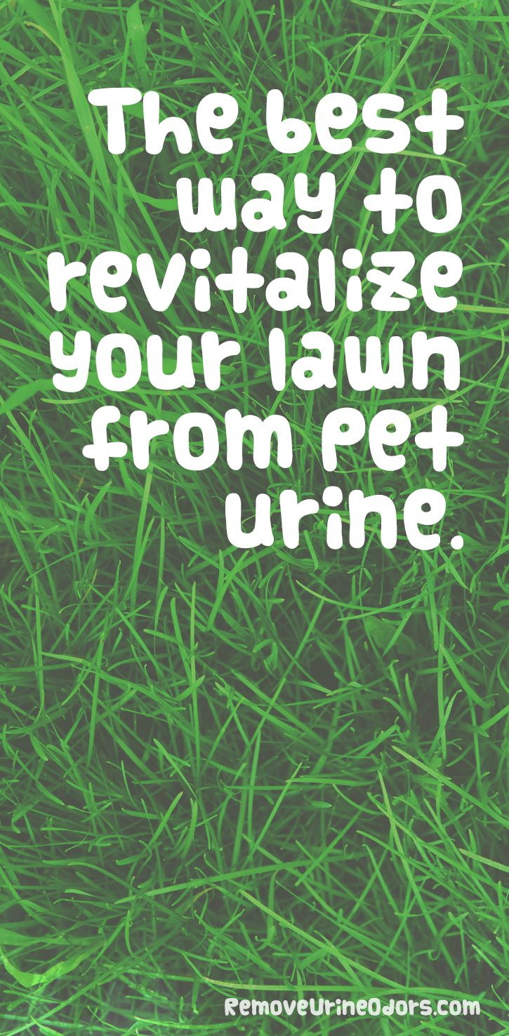 How To Remove Urine Odor: 10+ handpicked ideas to discover ...