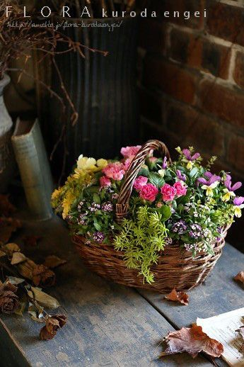 春らしいピンクのプリムラバスケット寄せ植え の画像 フローラのガーデニング・園芸作業日記