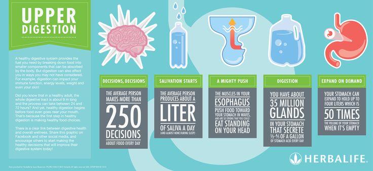 EN Herbalife Infographic - Upper Digestion .jpg 2526×1161 pixels