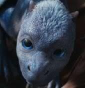 """Baby """"Saphira"""" from the movie Eragon"""