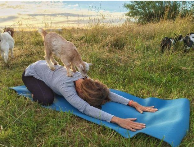 A Goat Yoga class on a farm in Oregon is a thing