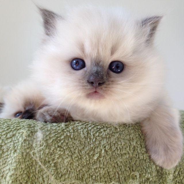 c cat burlington iowa
