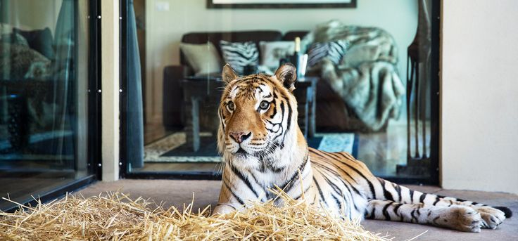 Home - Jamala Wildlife Lodge, located in National Zoo and Aquarium in Canberra