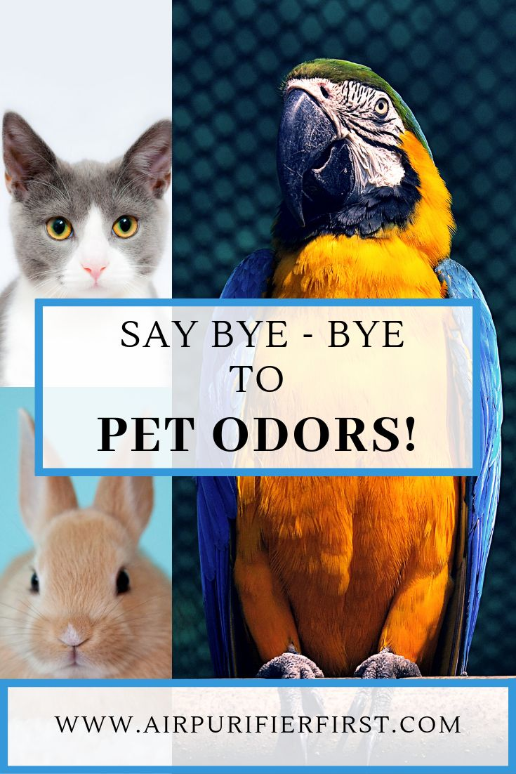 Using an Air Purifier to Get Rid of Pet Odors (With images