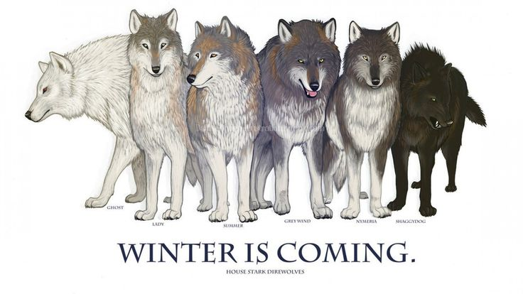 Ghost, Shadow, Lady, Nymeria, Summer and Shaggydog. The Dire Wolves of Winterfell.
