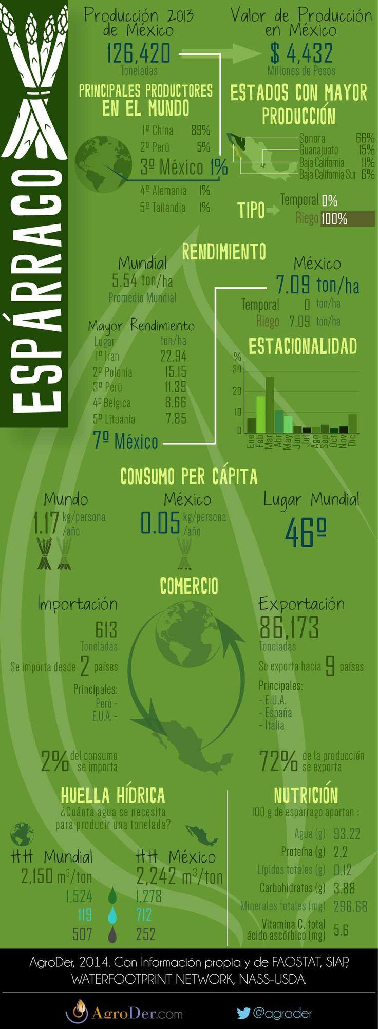 Infografía - Espárrago en México, 2013.