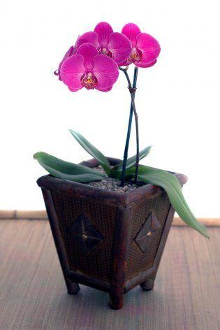 Sobno cveće: 5 biljaka koje se lako gaje i 5 zahtevnih za negu  Porodica  Ž...