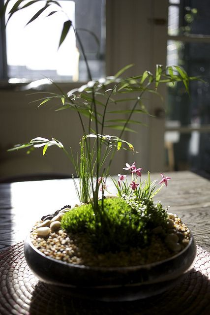 Tabletop indoor moss garden | Flickr - Photo Sharing!
