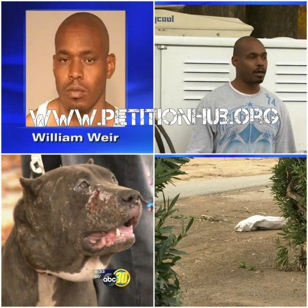 Maximum Penalty For William Weir! Accused Of Encouraging His Pit Bulls To Destroy A Puppy And Participating At Dog Fights! | PetitionHub.org