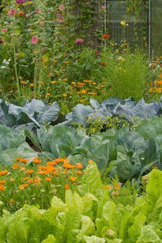 Mischkulturen im Gemüsegarten. Gute Erklärung zu Nachbarn, Vorteile etc.