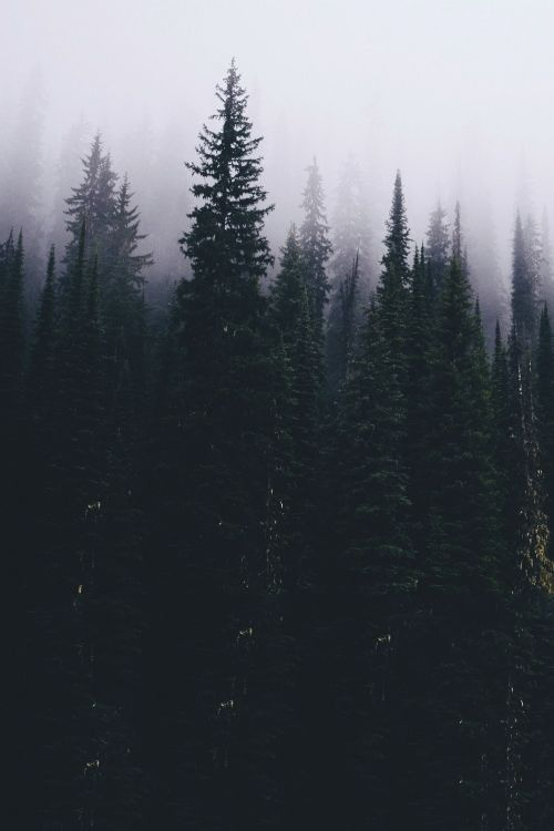dark places forest trees - photo #25