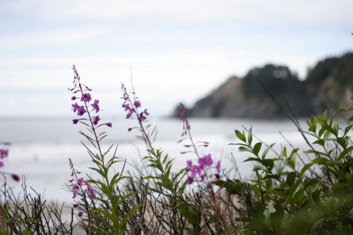 Located in Tillamook County, Oswald West State Park is an enchanting stretch of the Oregon Coast that'll blow you away with its unique and varied beauty.