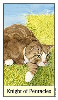June 13 Tarot Card: Knight of Pentacles (Cat's Eye deck) Practical methods and realistic plans will do much more for you now than fancy maneuvers and creative wandering. Keep your head down and keep moving, and there's great potential for success