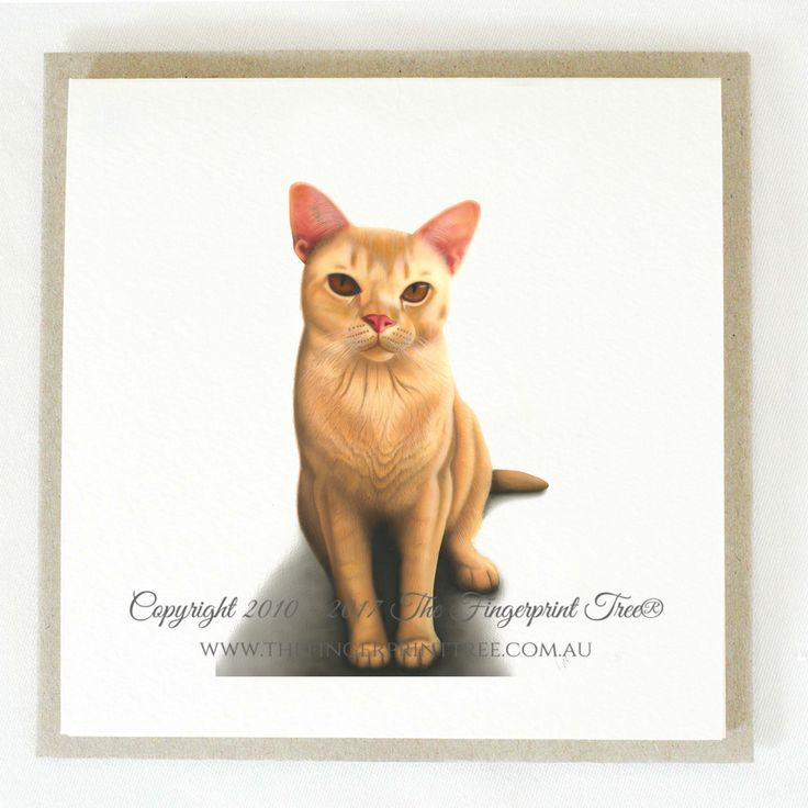Gift card - Ginger cat:  Cards! by The Fingerprint Tree® is our couture range of gift cards featuring illustrations by Ray Carter, Chief Artist & Founder.  Made-to-order and Giclée printed at our Southern Highlands studio.   We sell direct to the public and to retailers.