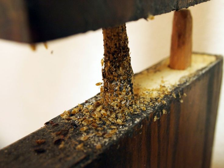 how to detect bed bugs in furniture