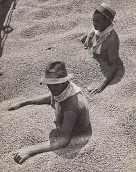 Martin Munkácsi :: Coffee Tragedy in Brazil, 1932