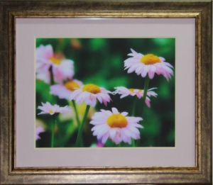 "New double Matted photo of some summer flowers. Photo taken by Carl Brownell/Joe-Lynn Design. Printed, matted and framed by Carl Brownell/Joe-Lynn Design.  $200.00  Print is 16"" x 12 "" (Verona ultra smooth fine art HD 250 - 100% cotton) mounted on foam core and finished in the back. Frame is 20"" x 16"". Ready to hang. Call 204-586-4738 Find more images at www.joe-lynn.com/ We do custom matting and framing as well as Giclée fine art and canvas prints."