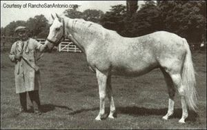 Perfume (GB), dam of 2000 Guineas winner My Babu.  The latter was a French stud whose blood produced many a great eventer, including Bruce Davidson's legendary mount, JJ Babu.  His blood flows through AP Indy's damline from great broodmares including Weekend Surprise & Missy Baba.