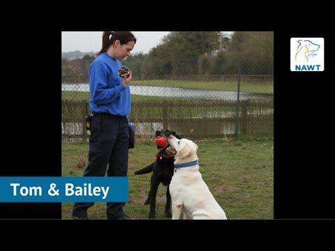 Labrador Dog Rescue Centres  Labrador Rescue Centres: Before And After