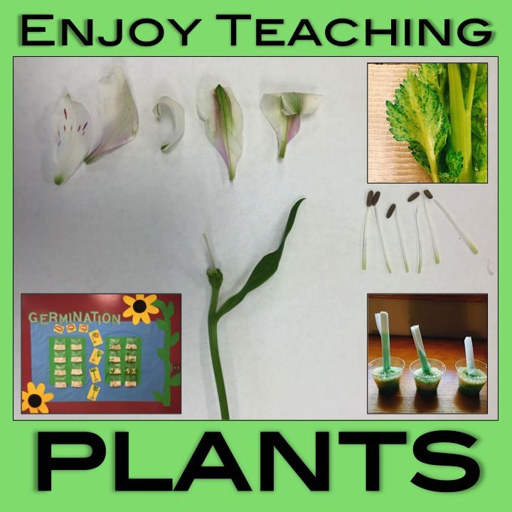 Enjoy teaching plants with these hands-on activities, video links, and freebies. Your third, fourth, and fifth grade students will love it!