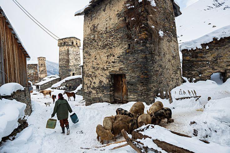Picture of a person feeding livestock in Ushguli, Georgia