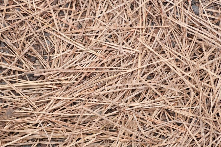 Mulching with organic materials helps add nutrients, keep weeds at bay and warm the soil. Is pine straw good mulch? Pine straw is freely available in areas with pine trees and is inexpensive to purchase in bales. Click here to learn more.