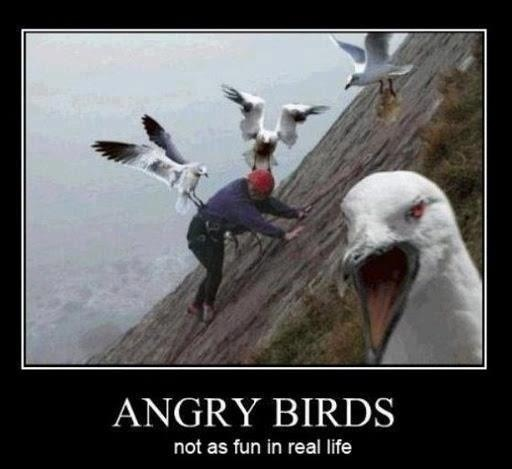 Ouch: Real Life, The Real, Funny Pictures, Hate Birds, Funny Stuff, Real Angry, Birds Attack, Angry Birds, Demotivational Poster