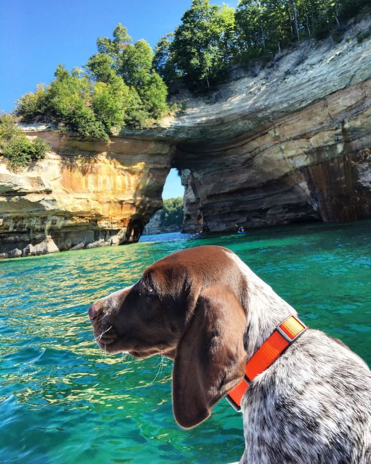 16 best GSP images on Pinterest | German shorthaired pointer ...