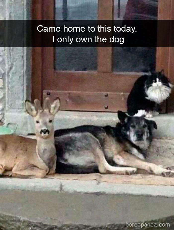 Funny Hilarious Dog Snapchats Funny Animal Jokes Funny Animal Photos Animal Jokes