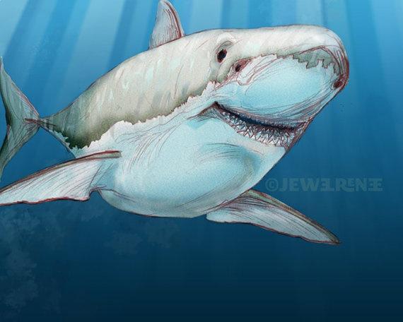 9 best sharks of long island sound images on pinterest for Blue fish pediatrics
