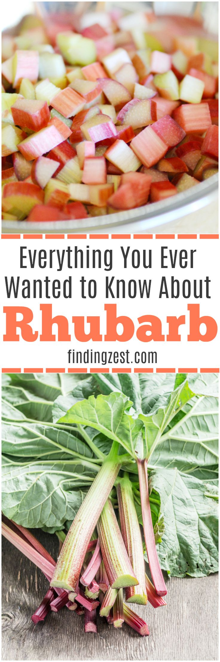What is Rhubarb? Find out everything you need to know about rhubarb including what rhubarb tastes like, how to grow rhubarb, how to harvest rhubarb and what to do with rhubarb!  #gardening #rhubarb