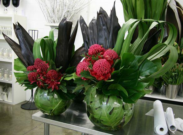 Waratahs in Vase