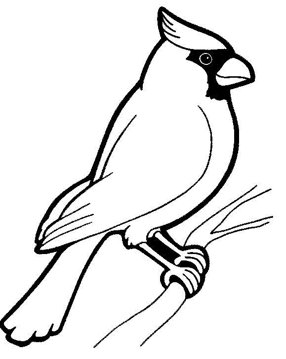 Birds Coloring Pages Free