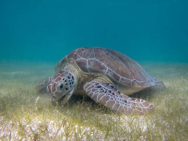 Another Reason Not To Eat Sea Turtles: Antibiotic-Resistant Bacteria | Popular Science