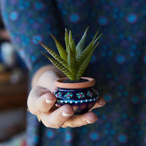 The perfect houseplant, faux succulents mean you'll never have to water!  They'll look super-cute on your work desk, bedroom dresser or on your kitchen window sill!