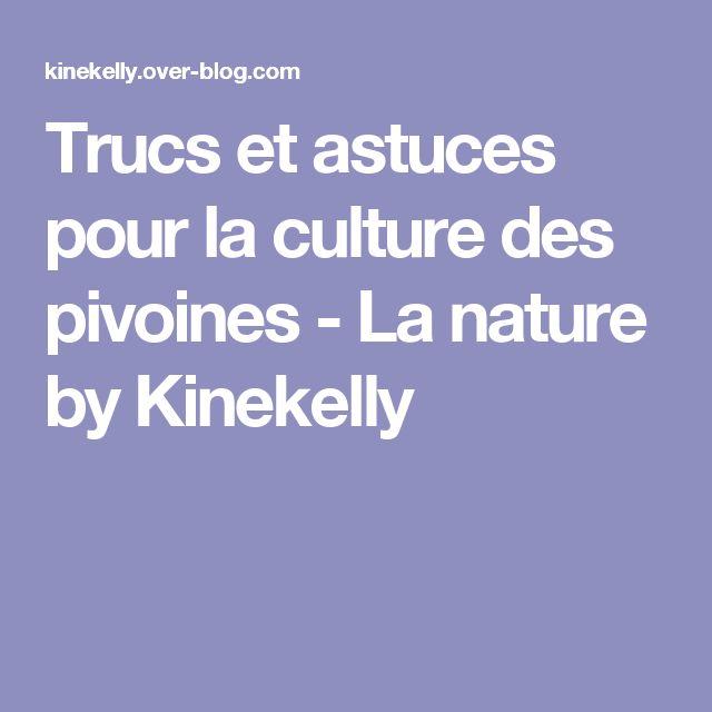Trucs et astuces pour la culture des pivoines - La nature by Kinekelly