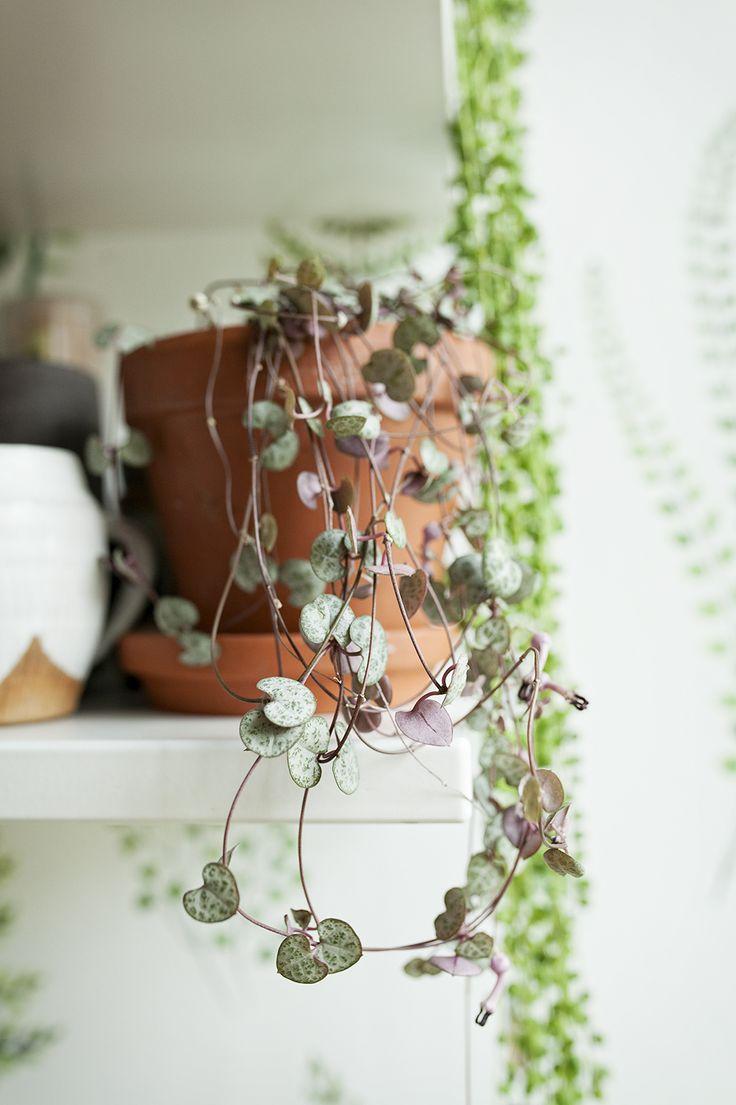 Latwe Rosliny Doniczkowe I Polecane Lektury White Plate Plant Hanger Macrame Plant Plants