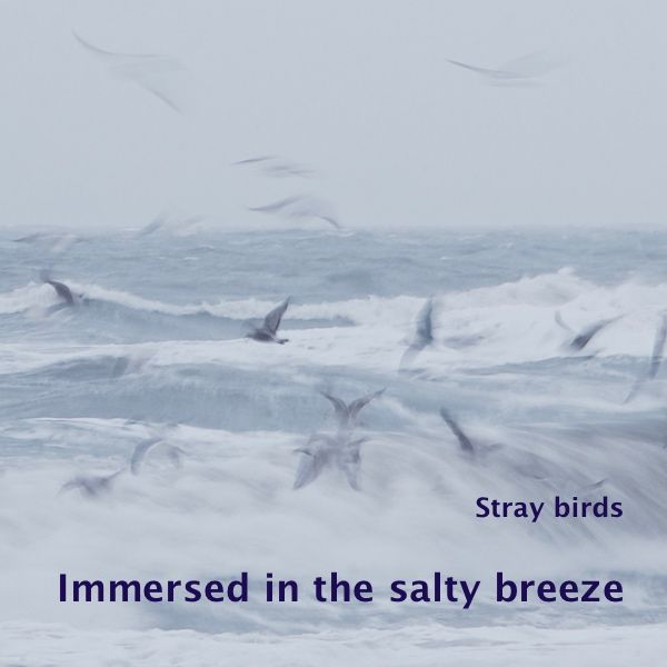 Wind and water blend into an icy mist, The birds immerse themselves into the salty breeze In a wild dance with the breaking waves   'Immersed in the salty breeze' is a photo in a s…
